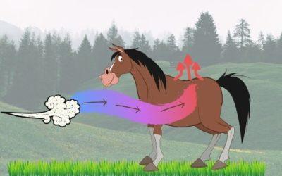 De temperatuur huishouding van een paard