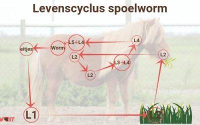 Spoelwormen bij paarden: Dit wil je weten